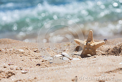 Starfish and shells in the sand near the sea