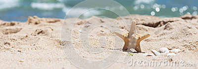Starfish and shells in the sand on the seashore