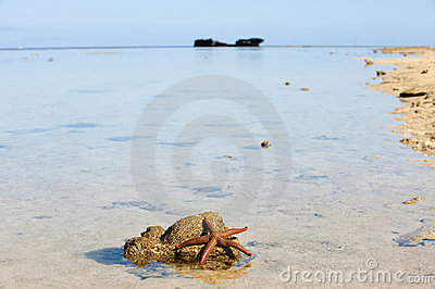Starfish and shipwreck