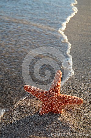 Starfish On A Tropical Beach