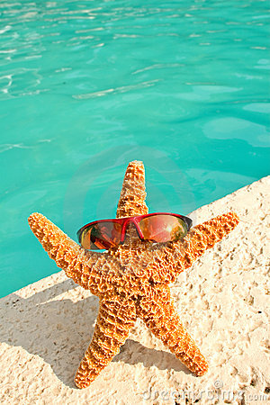 Starfish on Vacation by Pool