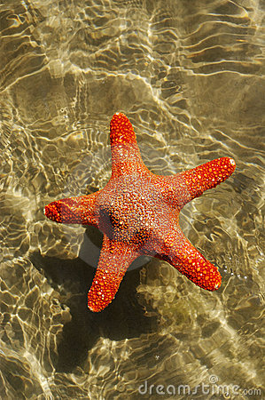 Starfish in a water.