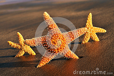Starfishes on the sand of a beach