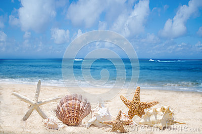 Starfishes and seashells on the beach
