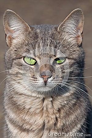 Free Staring Cat Royalty Free Stock Photos - 13910198