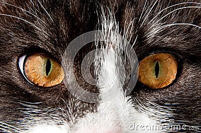 Staring cat eyes