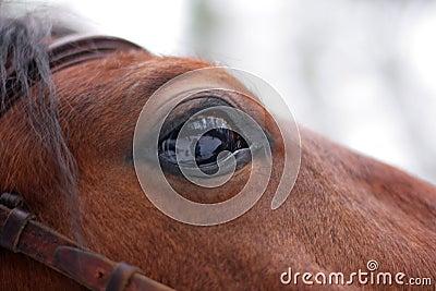 Staring Horse s eye