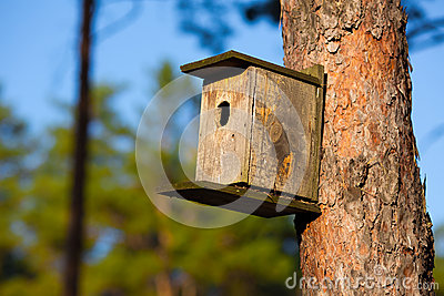 Starling house in forest