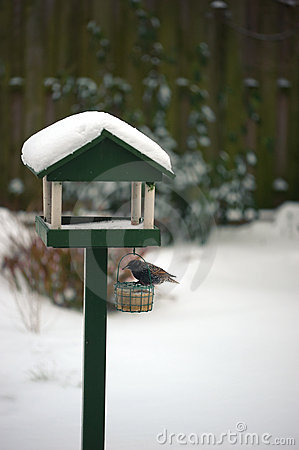 Free Starling On Bird Table Stock Photo - 12274740