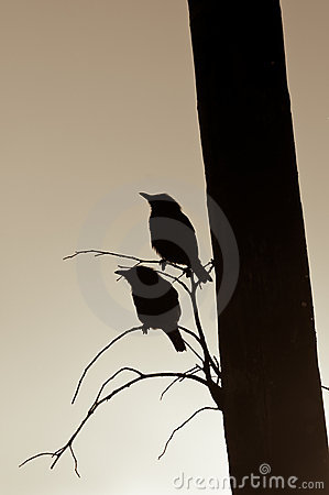 Free Starlings Silhouettes Royalty Free Stock Photography - 8377277
