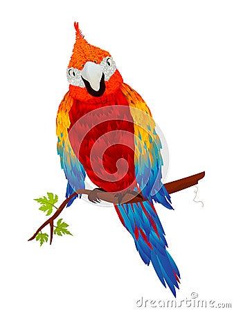 Starring parrot