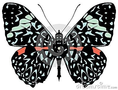 Starry Night butterfly