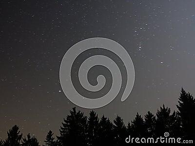 Starry sky above fir forest Stock Photo