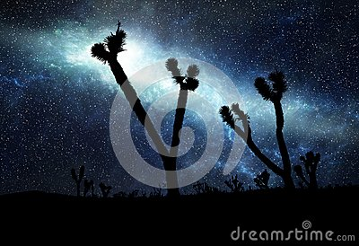 Starry Sky Desert Silhouette (Illustration)