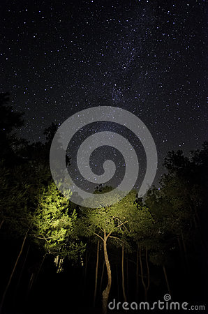 Free Stars In The Forest Royalty Free Stock Photos - 90455758