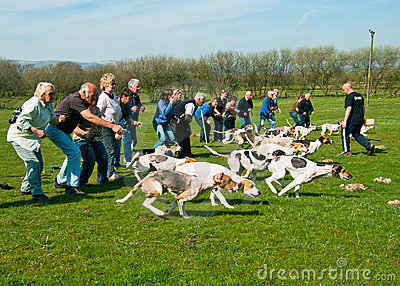 Start of a Hound Trail Editorial Stock Photo
