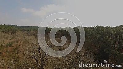 Start voor dode bomen stock videobeelden