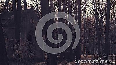 Stary crypt w cmentarzu zbiory wideo