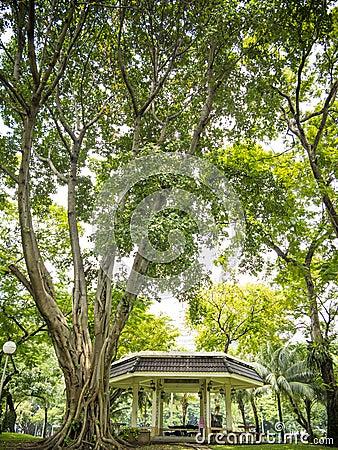 Stary drzewny pawilon