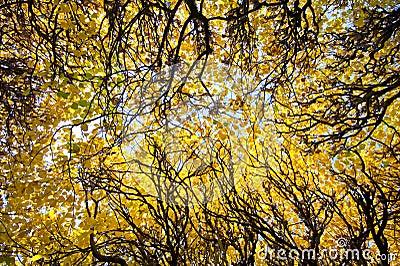 Stationnement d automne