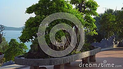 Steadycam schoss von einem großen Bonsaibaum nach innen von einen budhist Tempel Ho Quoc Pagoda auf Insel Phu Quoc, Vietnam stock video footage