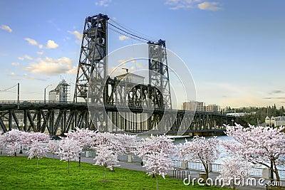 Steel Bridge Cherry Blossom Trees Portland Oregon