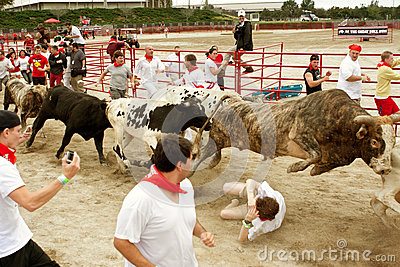 Steer Leaps Over Man Trampled In Georgia Bull Run Editorial Photography