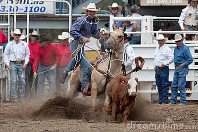 Steer Roping - PRCA Sisters, Oregon Rodeo 2011 Editorial Stock Image