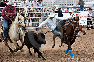 Steer wrestling Editorial Image