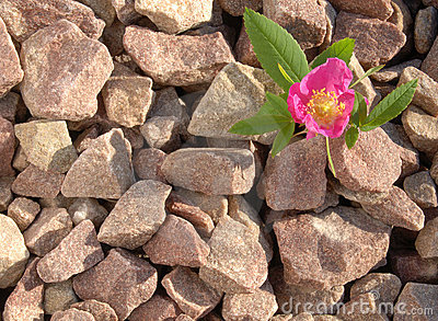 Steg stenen