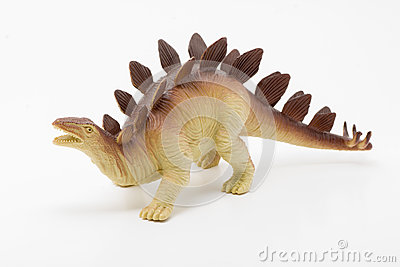 Stegosaurus on White