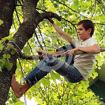 Steigen Sie einen Baum