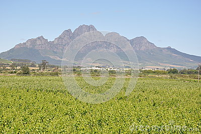 Stellenbosch  South Africa Cape wine country
