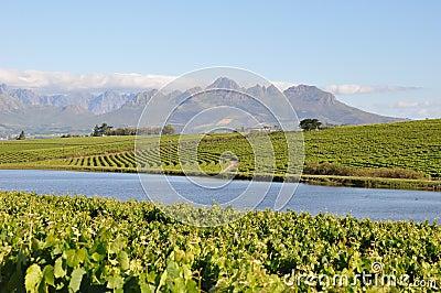 Stellenbosch winelands south africa