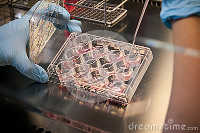 Stem Cell Culture in a Laboratory