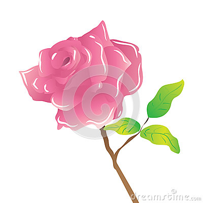 A stem pink rose on white