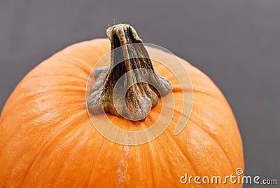 Stem On Pumpkin