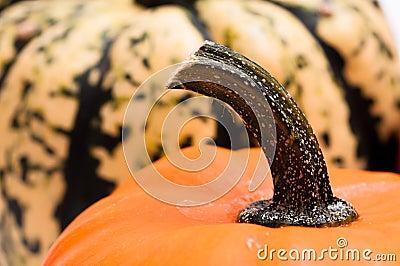 Stem of a pumpkin