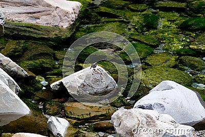 Stenen bevattnar och fågeln