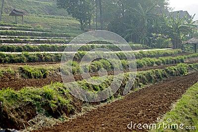 Step farm