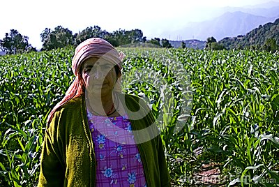 Step farming Editorial Stock Photo
