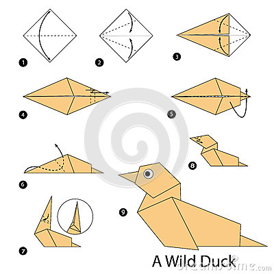 Vector Step By Instructions How To Make Origami A Wild Duck