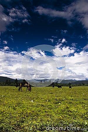 Steppe, the sky