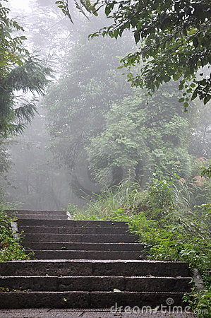 Steps in fog