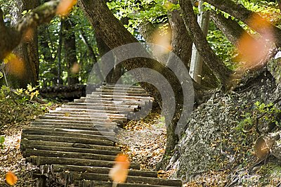 Steps in forest