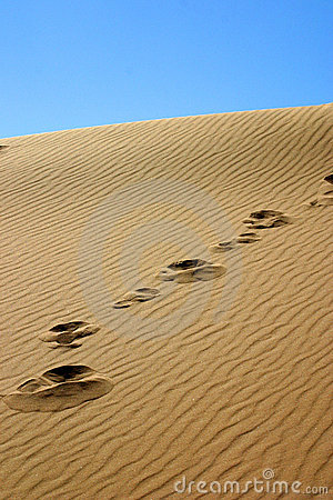 Free Steps In The Dune Royalty Free Stock Image - 492606