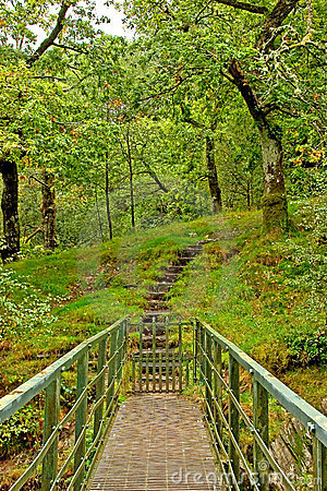Free Steps Into The Woods Royalty Free Stock Image - 1370726