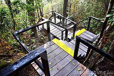 Steps surrounded in the forest
