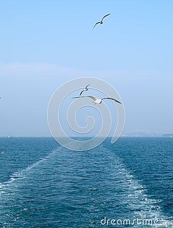 Free Stern Sea Stock Image - 3285071
