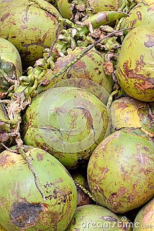 Cocoanut z surową pokrywą